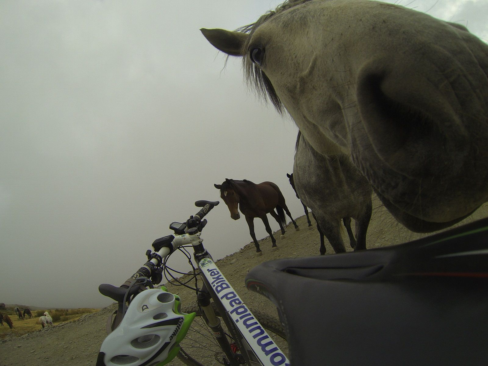 Una aventura única, una hazaña inolvidable, coronación del Veleta en Sierra Nevada por Comunidad Biker MTB