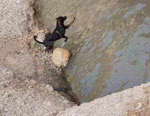 Perro saltando al agua en poza del río Chícamo en el Cajel en Abanilla por Comunidad Biker MTB