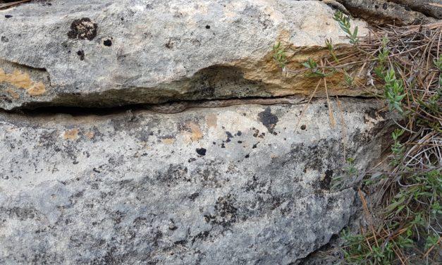 Crónica de la ruta MTB Molina Villanueva Río Segura Cajal Sierra de Ricote Sendero Aguilucho Sendero Zetas Embalse